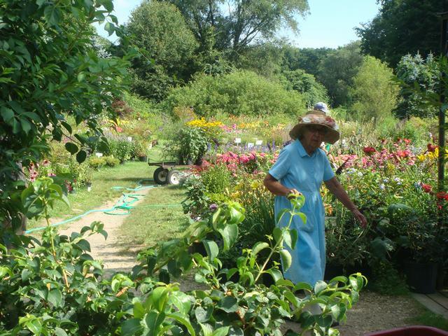 田舎の苗木園は夏の花の狂宴まっさなか、_d0100880_8183035.jpg