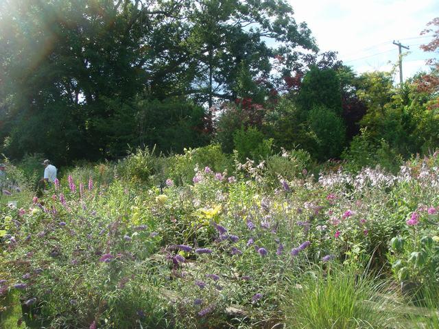田舎の苗木園は夏の花の狂宴まっさなか、_d0100880_822844.jpg