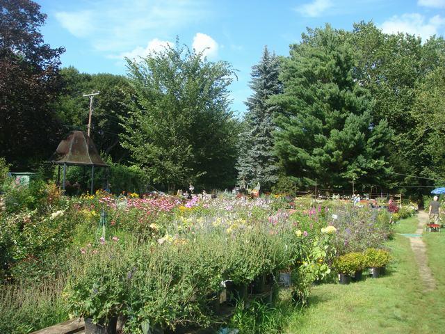 田舎の苗木園は夏の花の狂宴まっさなか、_d0100880_824323.jpg