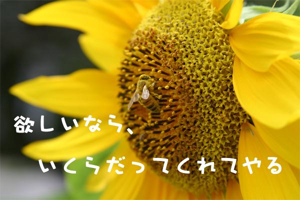 c0007384_8525825.jpg