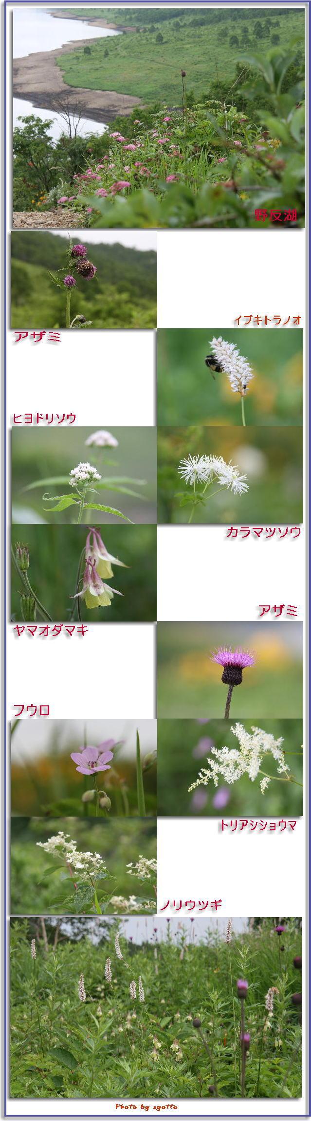 f0164592_7592620.jpg