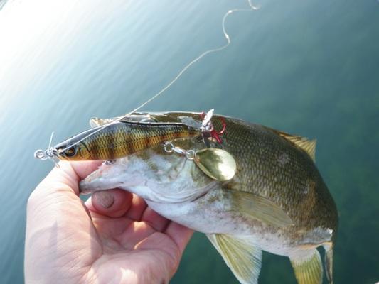 釣行記 『6/22 灼熱の湖でスモールマウス釣り!!』_d0145899_22155285.jpg