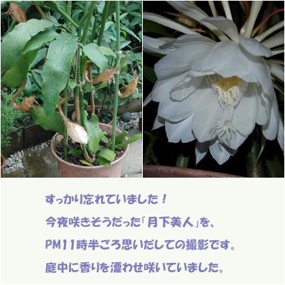 c0051105_0291348.jpg