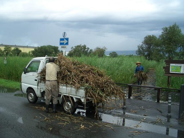 浮島ヶ原自然公園のタコノアシ救出作戦!_f0141310_23261750.jpg