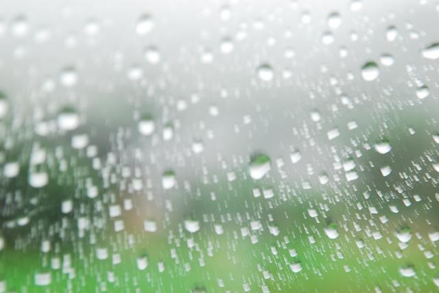 今日も雨_d0047811_923282.jpg