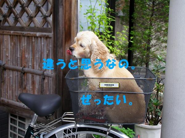 b0067012_20341.jpg