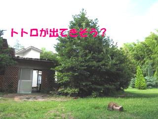 c0185516_2321750.jpg