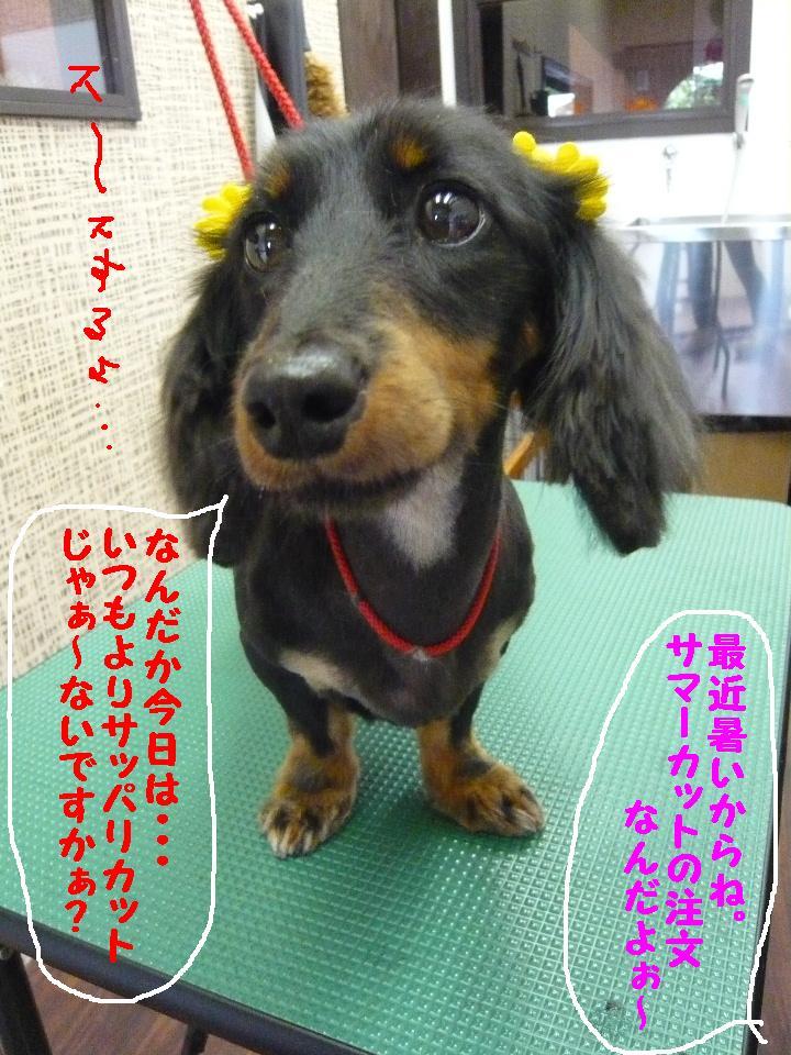 5連続紹介!!_b0130018_18271452.jpg