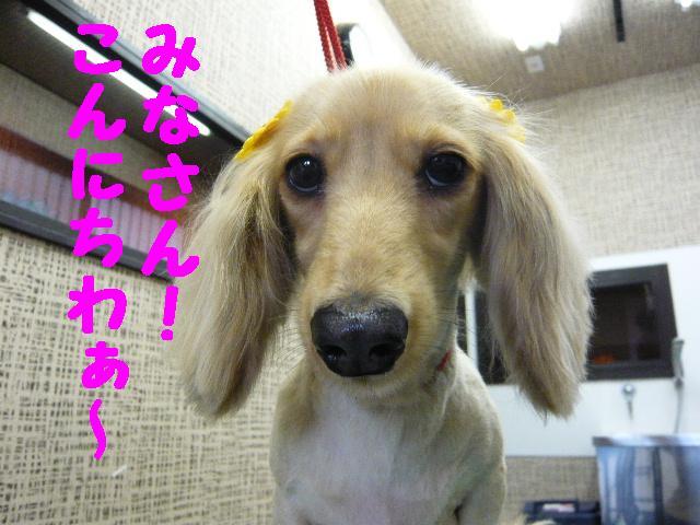 5連続紹介!!_b0130018_18273721.jpg