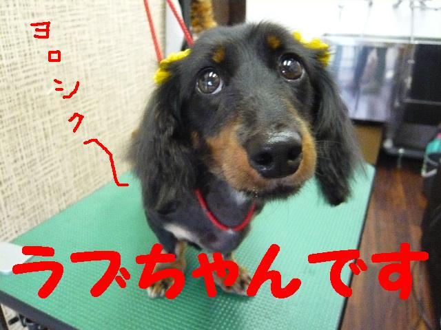5連続紹介!!_b0130018_1827744.jpg