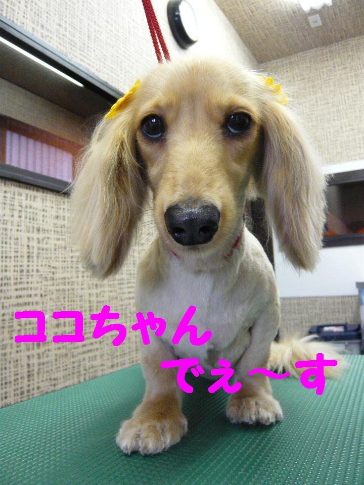 5連続紹介!!_b0130018_18281123.jpg