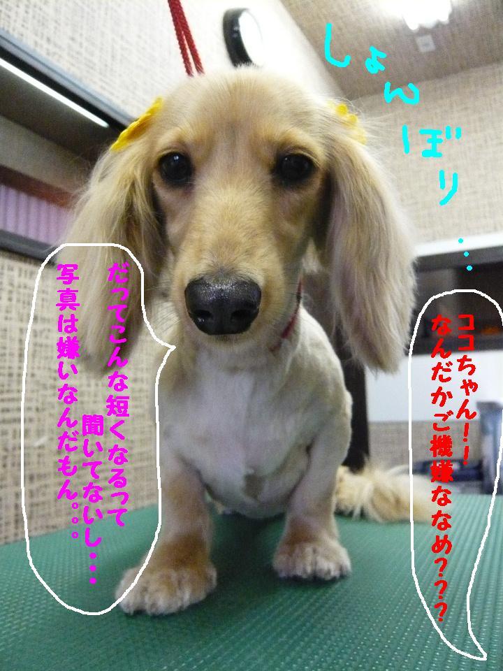 5連続紹介!!_b0130018_18281858.jpg