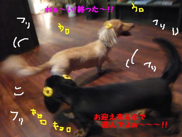 5連続紹介!!_b0130018_18283684.jpg