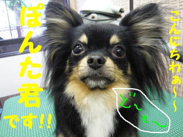 5連続紹介!!_b0130018_18294930.jpg