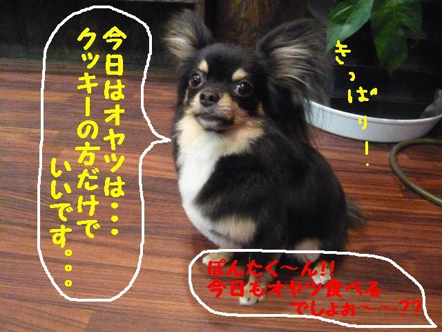 5連続紹介!!_b0130018_18302784.jpg