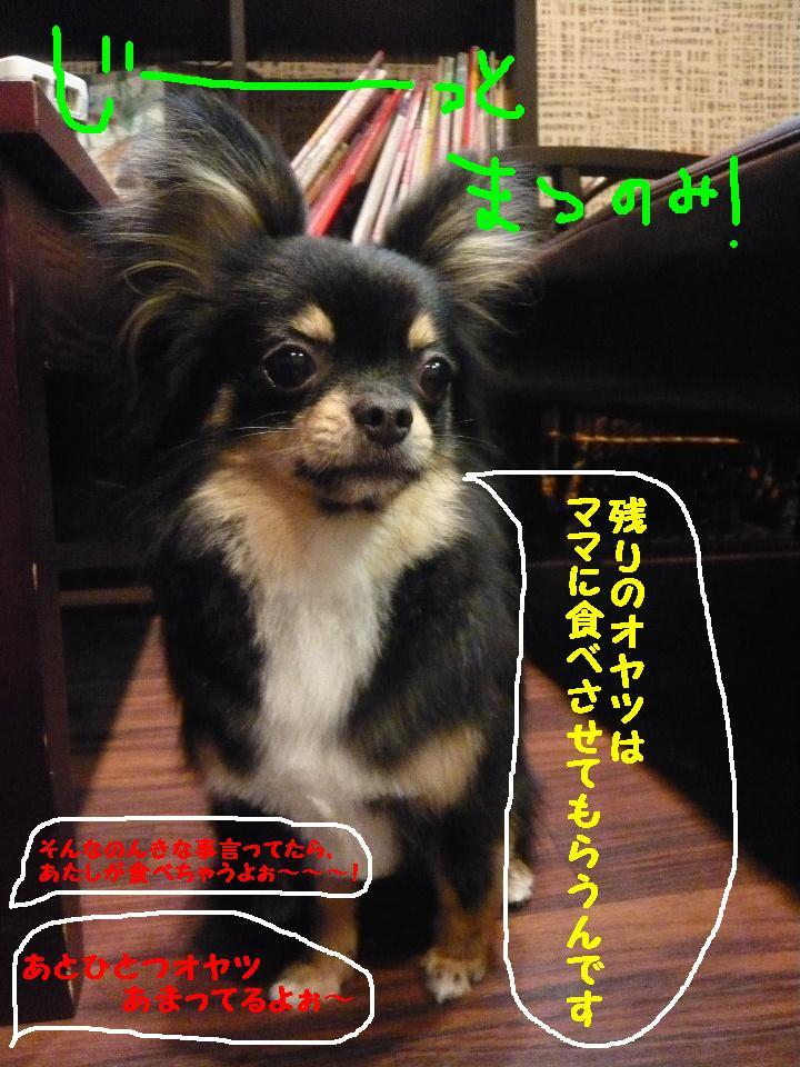 5連続紹介!!_b0130018_18303611.jpg