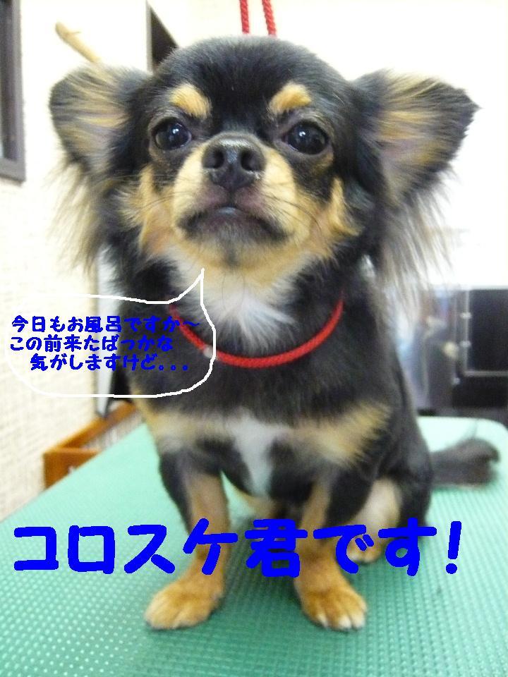5連続紹介!!_b0130018_1835083.jpg