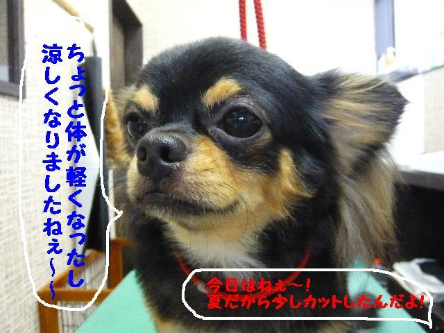 5連続紹介!!_b0130018_18355489.jpg