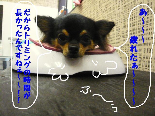 5連続紹介!!_b0130018_1836567.jpg