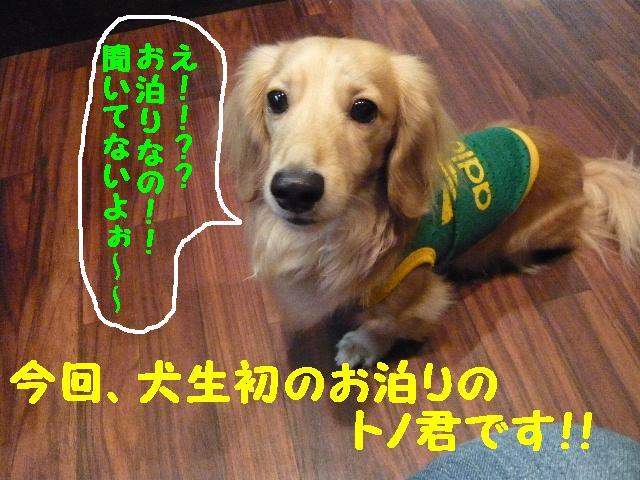 5連続紹介!!_b0130018_18382932.jpg