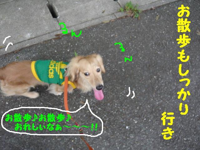 5連続紹介!!_b0130018_18402553.jpg