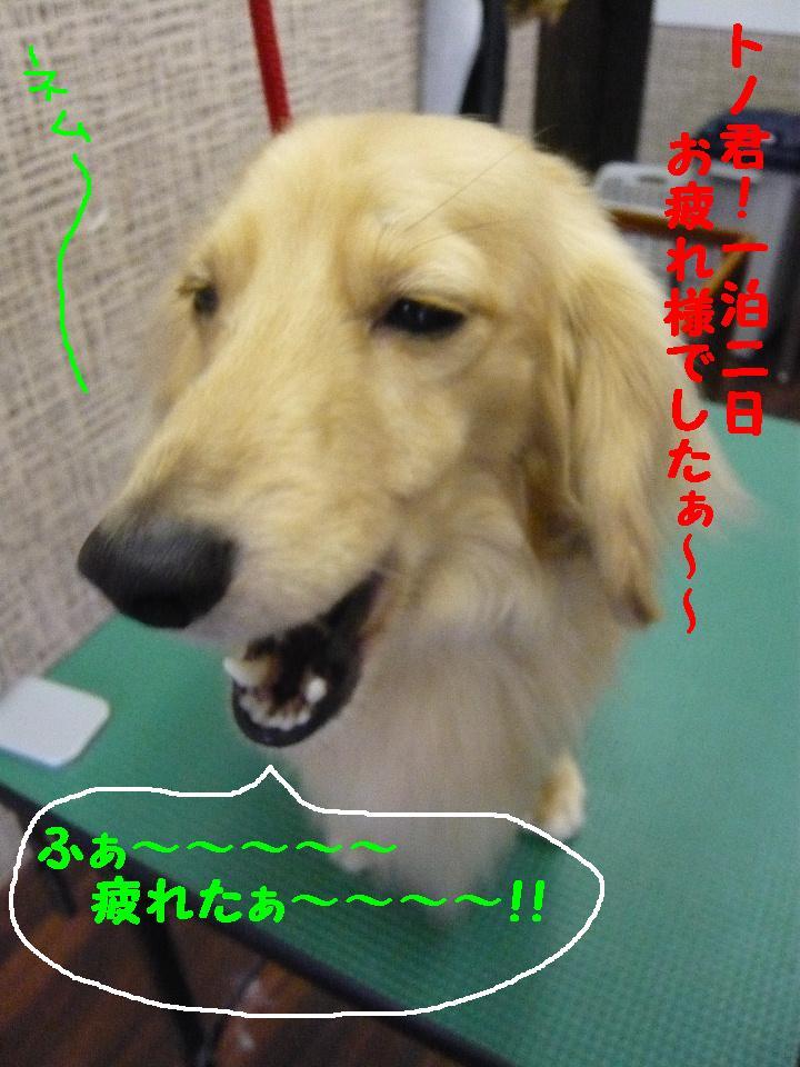 5連続紹介!!_b0130018_1841476.jpg