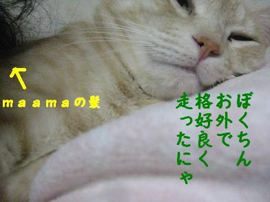 b0151748_1650555.jpg