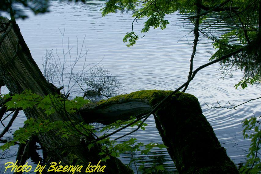 『湖面のささやき』_d0086248_10481914.jpg