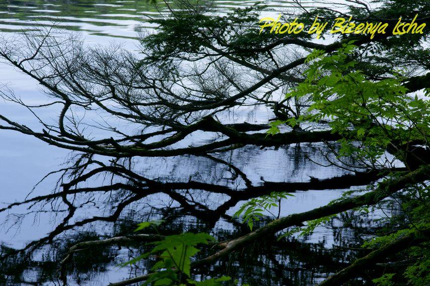 『湖面のささやき』_d0086248_10484894.jpg