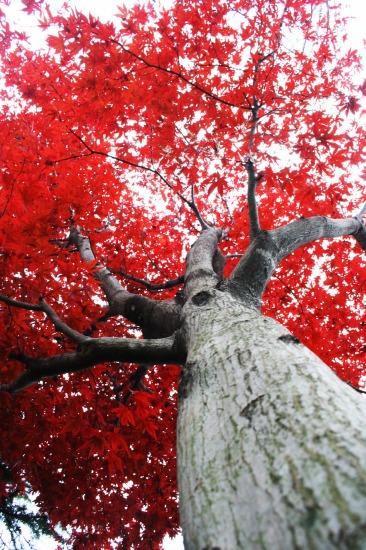 『生命の樹』_e0126350_15313735.jpg