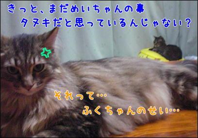 d0139352_037319.jpg