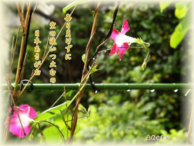 f0166871_1564690.jpg