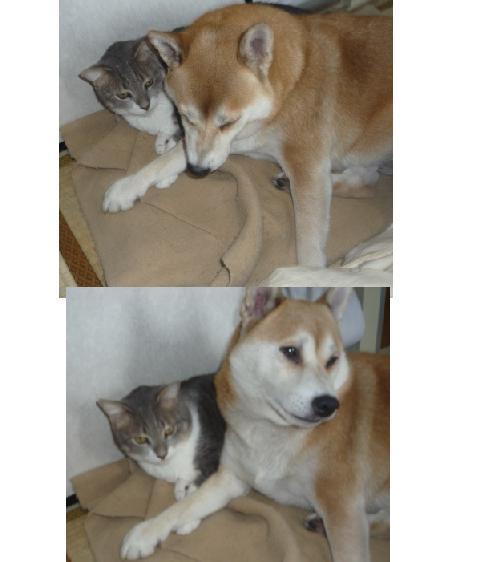 愛犬と猫たち_b0112380_9325651.jpg