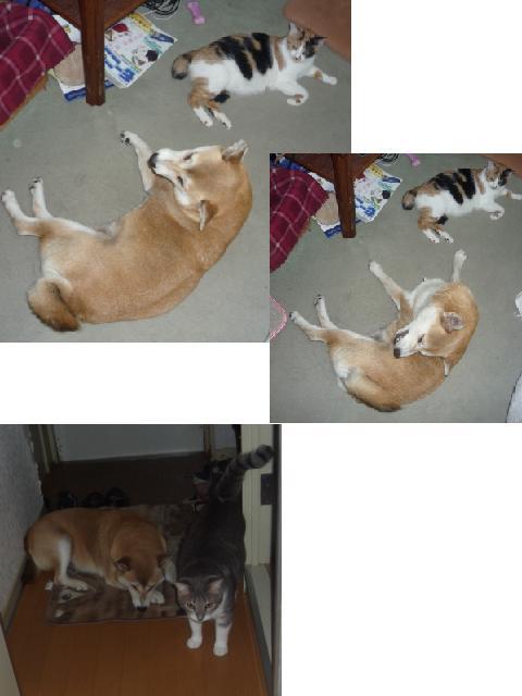 愛犬と猫たち_b0112380_9344569.jpg