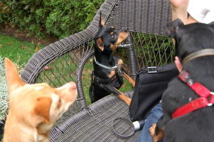 ベンチに集う犬達と・・そして龍太郎。_d0129786_1252472.jpg