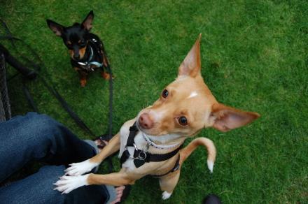ベンチに集う犬達と・・そして龍太郎。_d0129786_13111681.jpg