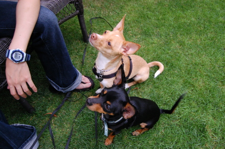 ベンチに集う犬達と・・そして龍太郎。_d0129786_1353573.jpg