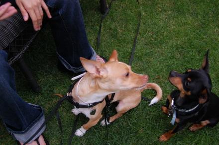 ベンチに集う犬達と・・そして龍太郎。_d0129786_137333.jpg
