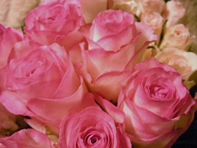 ブーケの前の花たち_c0128489_0202163.jpg