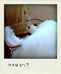 きび糖ちゃんのおともだち_f0187907_23165910.jpg