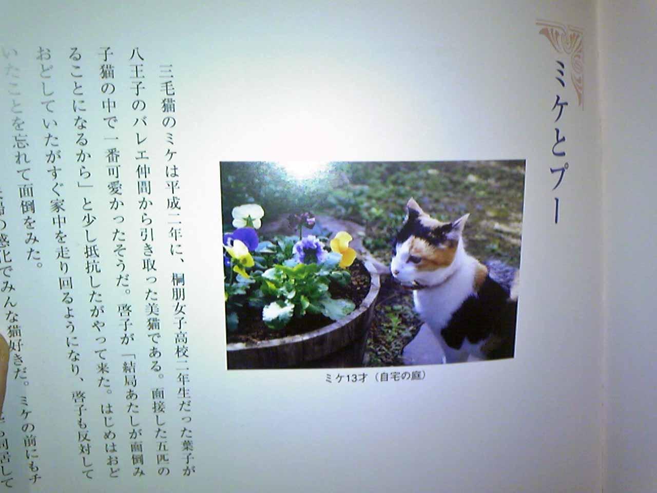 タイトルのこと_b0189509_0162053.jpg