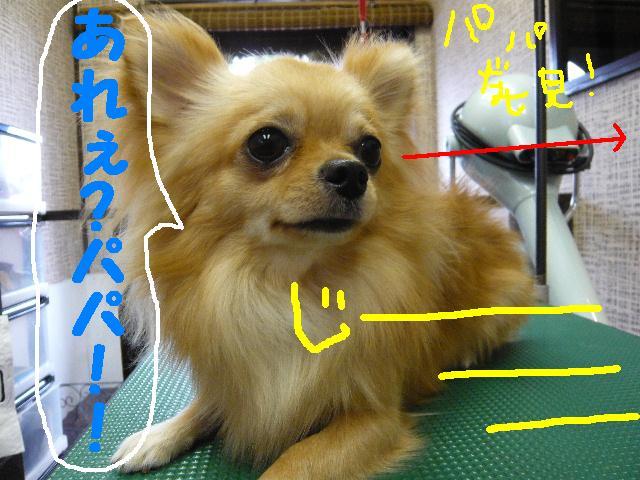 b0130018_1891567.jpg