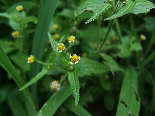 水元公園で見た花など_e0089232_2012571.jpg