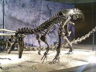 恐竜博2009_d0009833_22449100.jpg