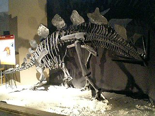 恐竜博2009_d0009833_2245915.jpg