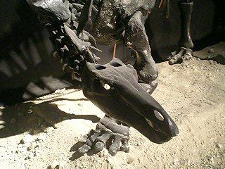 恐竜博2009_d0009833_2251342.jpg