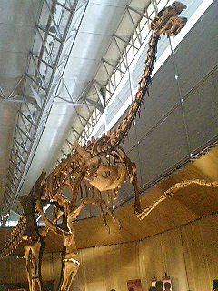 恐竜博2009_d0009833_2252429.jpg