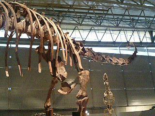恐竜博2009_d0009833_2261811.jpg