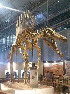 恐竜博2009_d0009833_2263461.jpg