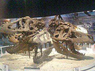 恐竜博2009_d0009833_2282196.jpg